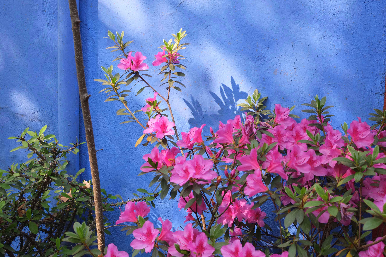 La_Casa_Azul_11_fot.anna_stec